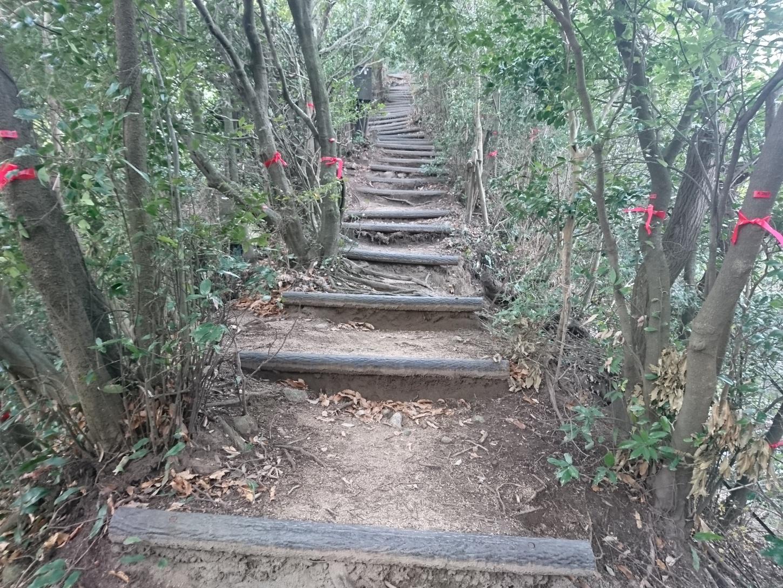 2017年の登り納めは裏山で。北野道から猿のかずら橋を経て城山道 ...