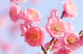 2月といえば… をいっぱい集めてみました | ジャパノート -日本の文化 ...