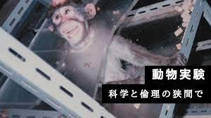 動物実験の是非とは?日本特有の動物観   Ridilover Journal(リディ ...