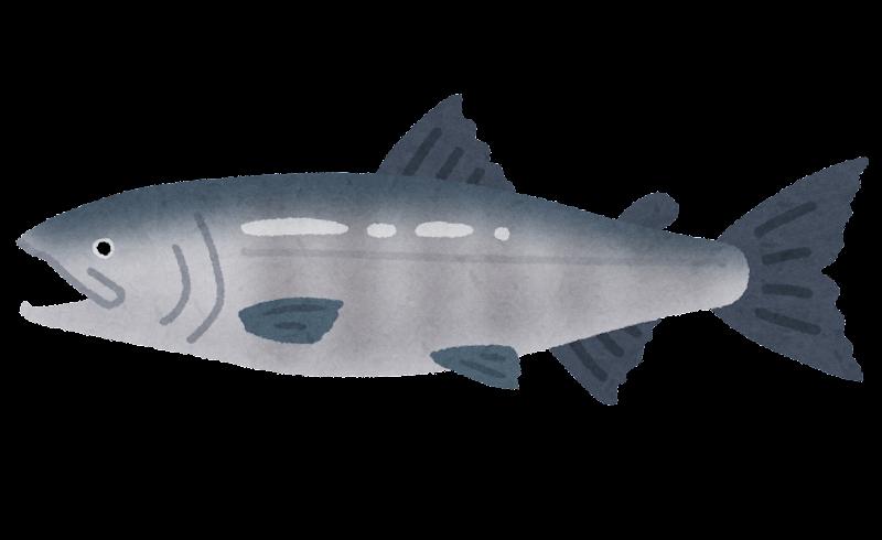 サケのイラスト(魚)   かわいいフリー素材集 いらすとや