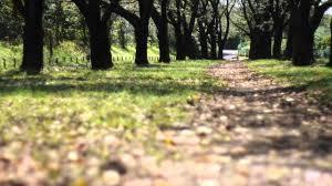 商用利用可能】癒しの自然動画素材No005 自然 川面と並木道 - YouTube