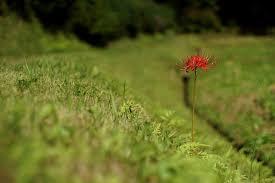 9月の花(9月に咲く花の画像や花言葉) | 花言葉-由来