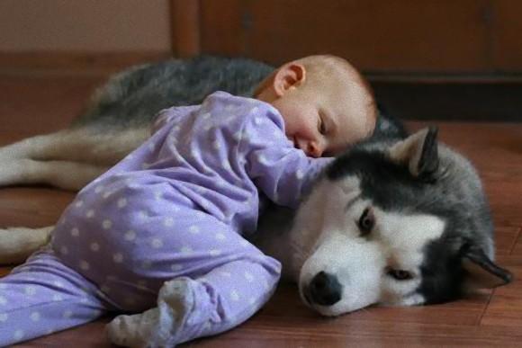 動物と人間の子供が仲良くしている可愛い写真24枚 | オモシロ画像の集積
