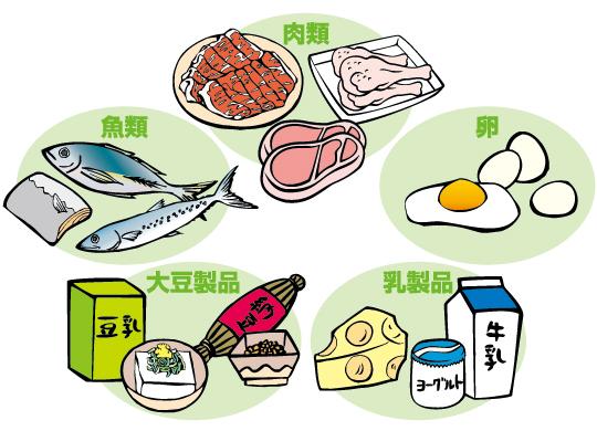 たんぱく質の効果的な摂り方   CramerJapan
