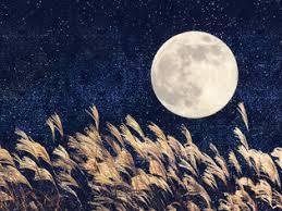 お月見・十五夜の過ごし方、楽しみ方 |All About