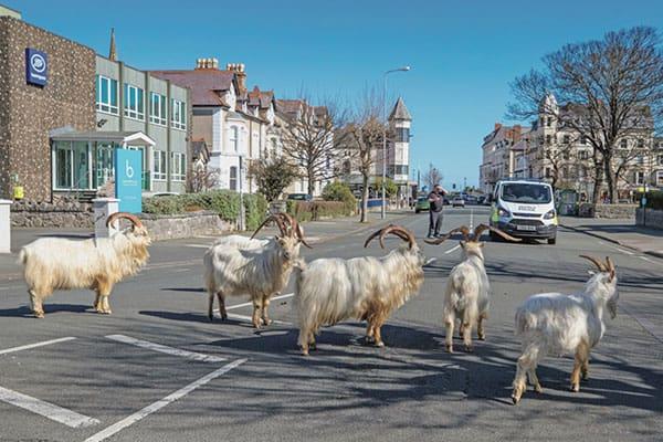 ロックダウンで人間が消えた街に…「野生動物」現れる | Smart FLASH ...