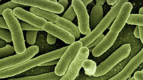 二酸化炭素を食べる大腸菌」が遺伝子操作で誕生 - GIGAZINE