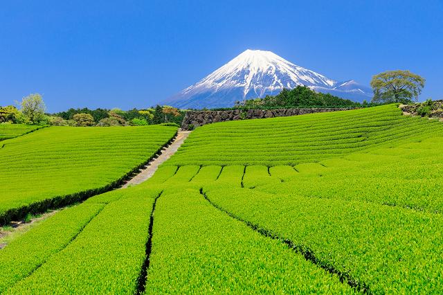 茶畑でお茶摘み体験やスイーツも♪ 静岡県の春の新茶を味わう旅に出 ...
