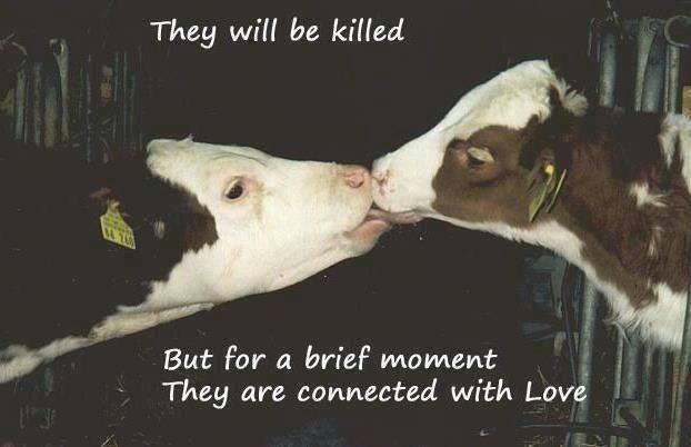 必読!食肉産業の崩壊の事実を知って下さい! - Cats Lover , Animal ...