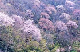 花彩々 山笑う - 《花彩々》・・・四季を彩る草花をコンデジやPC画で ...
