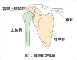 外傷性肩関節脱臼 | 市川の整体【医師も推薦】中央通り接骨院