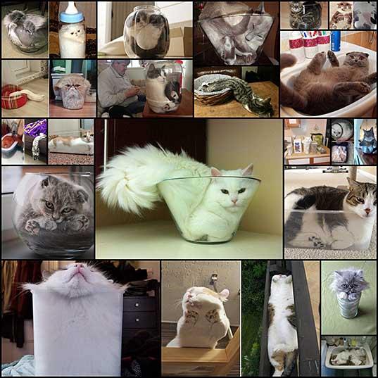 猫は液体である(写真20枚) - いぬらぼ