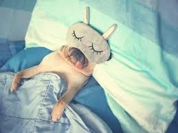 7時間以上の睡眠は身体に良いが、6時間以下の睡眠は徹夜と変わらない ...