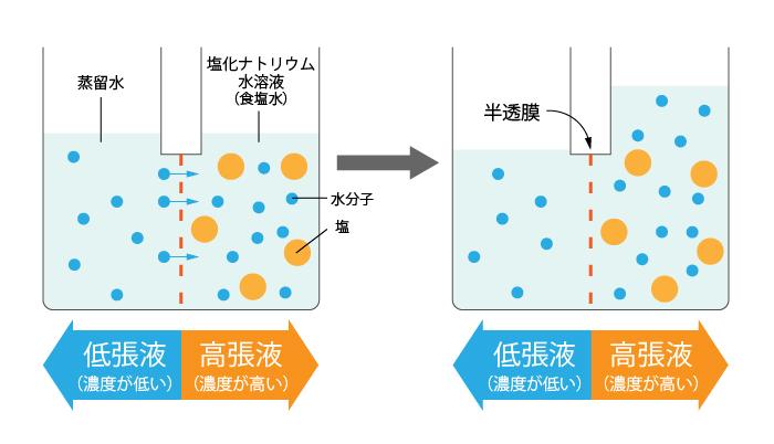 浸透圧とは?生物の細胞の仕組みをわかりやすく解説|高校生向け受験 ...