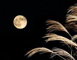 白露 –露と月が導く、収穫の時– | Sai-Jiki -彩時記- コラム