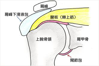腱板断裂:肩・肘(スポーツ疾患)|札幌羊ヶ丘病院整形外科