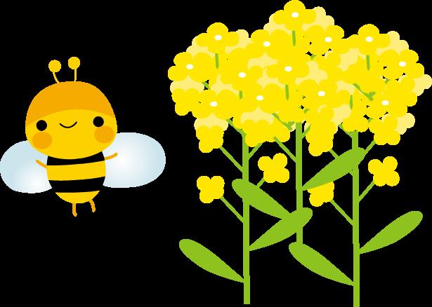 菜の花とみつばちのイラスト-無料イラスト/フリー素材