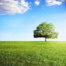 フリー写真素材|自然・風景|樹木|草原|画像素材なら!無料・フリー写真 ...