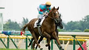 サウジアラビアRC】出世レースを制するのはどの馬だ 馬場傾向に ...