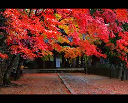 永源寺 : 滋賀を旅する 永源寺地区 - NAVER まとめ