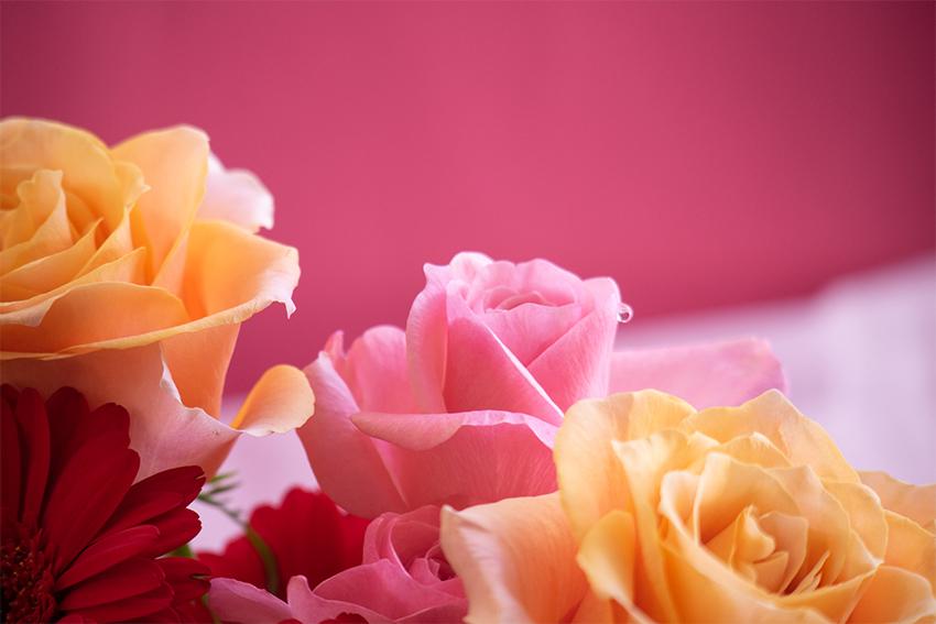 バラの花(ピンク) | フリー素材 キューブ