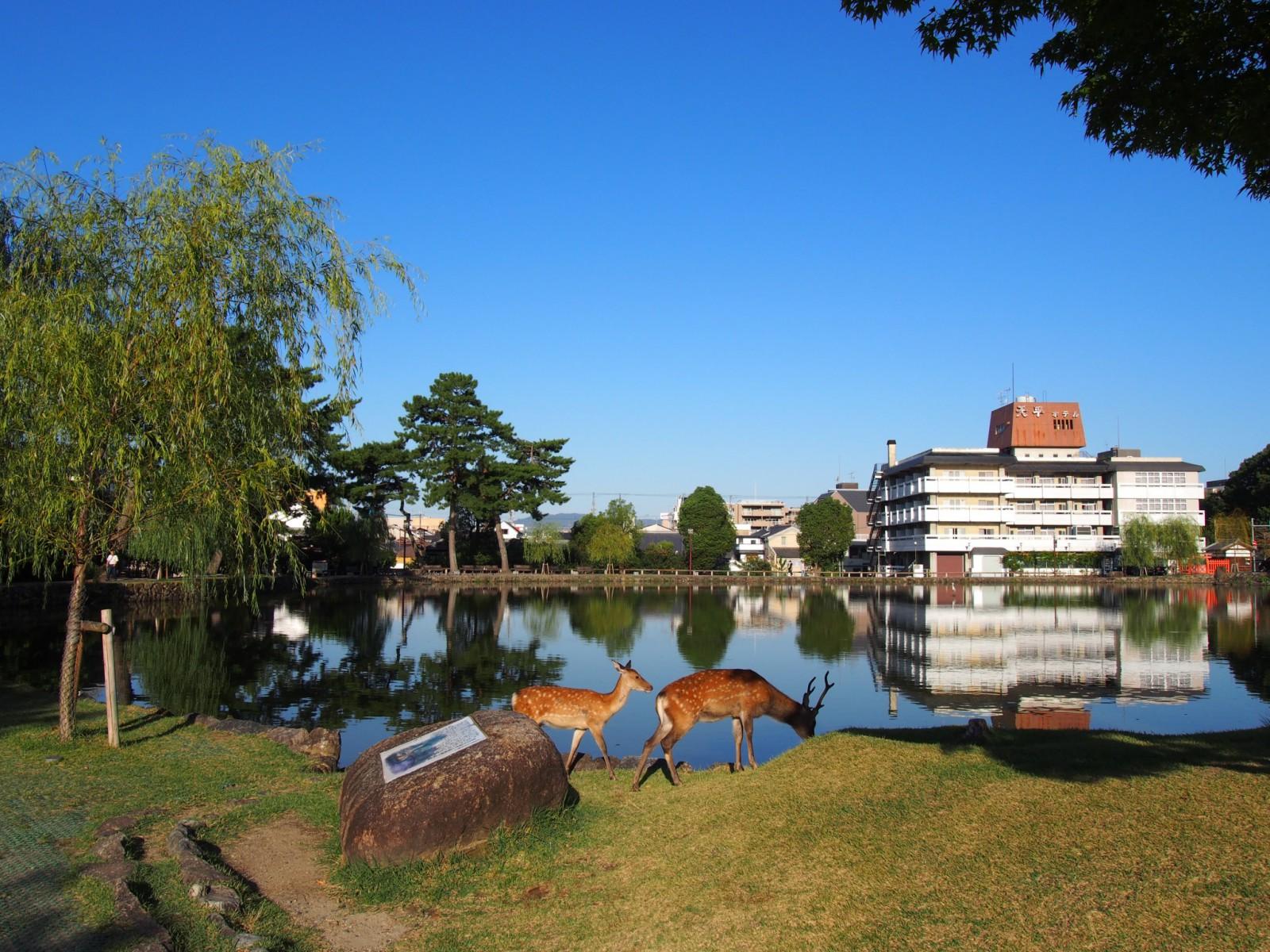 猿沢池】奈良のまちを象徴する「水辺」は采女伝説ゆかりの地 | 奈良 ...