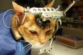 実は身近な動物実験、密室で失われる命の実態知って   オルタナS
